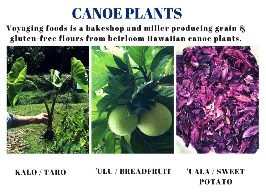 canoe-plants
